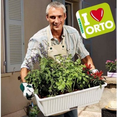 Ortovaso