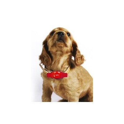 Collare GPS The Best Pet Tracker in ROSSO
